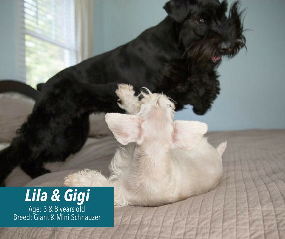 Lila and Gigi playing