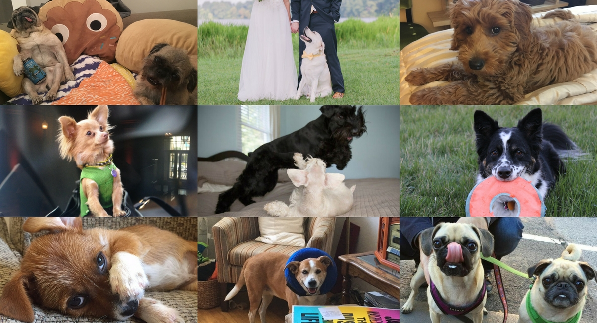 YSC Pups Celebrate National Dog Day