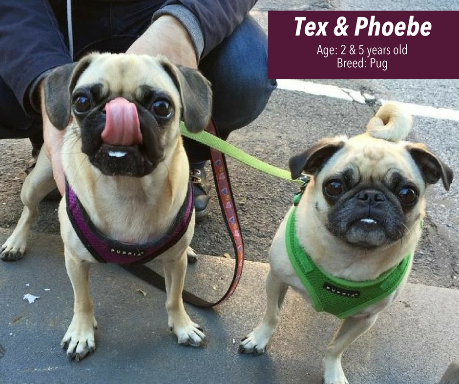 Tex and Phoebes sharing a Starbucks Puppuccino